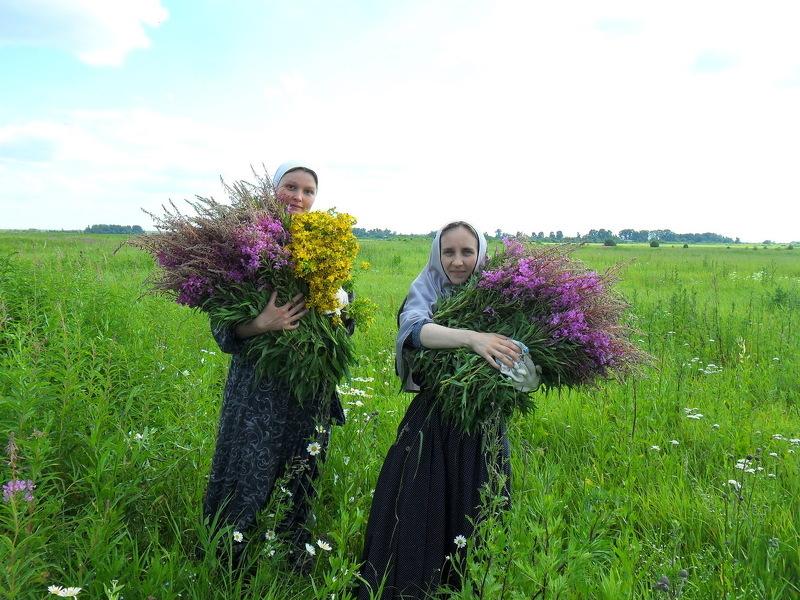 Собирают Иван чай в июне, для заготовки используют как стебель, так и цветы