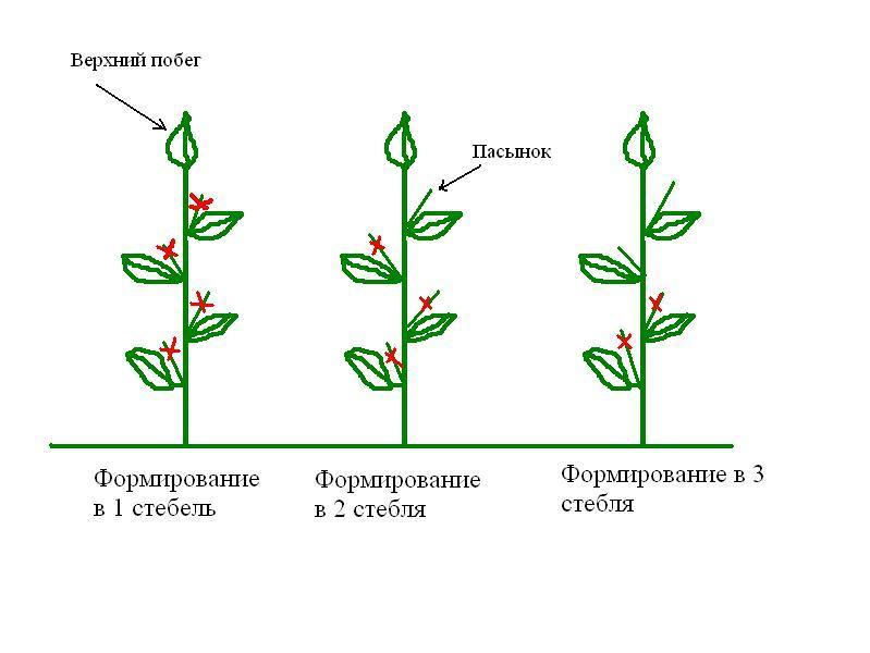 Схема формирования куста перца