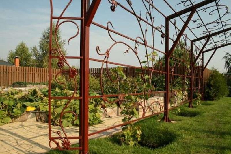 Шпалера для винограда может стать настоящим украшением участка