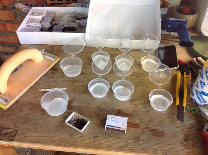 Скарификация семян хвойников в серной кислоте