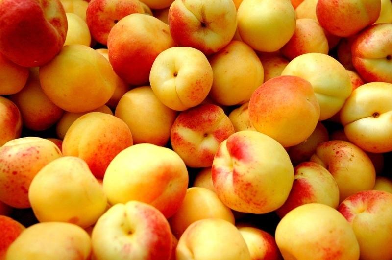 Сорт абрикосов Снегирек