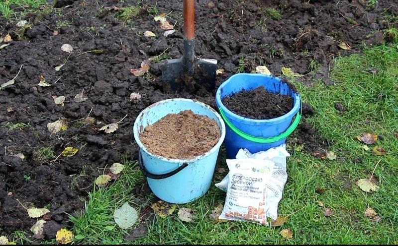 Суперфосфат поможет восстановить содержание фосфора в грунте