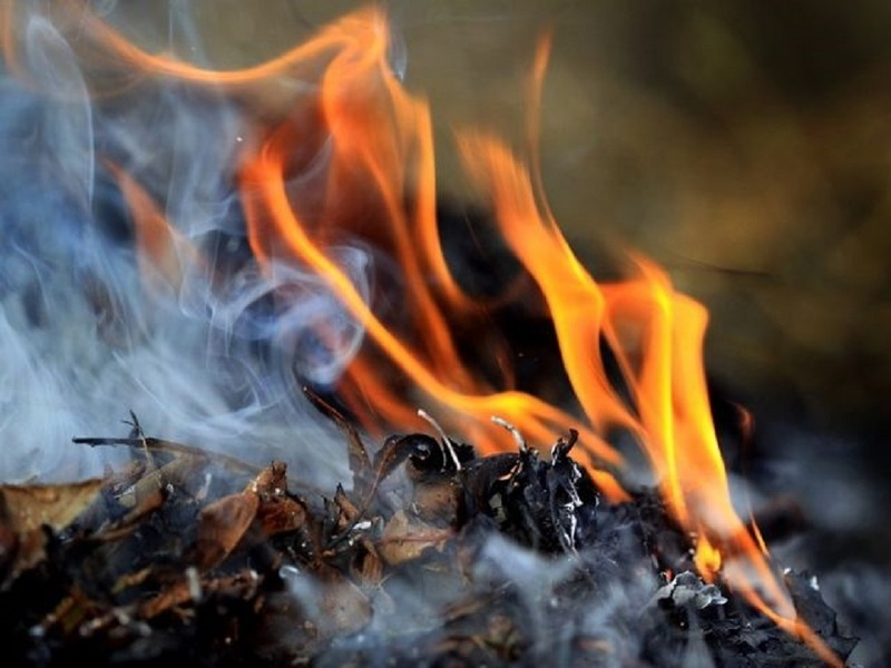 Сжигаем сорняки и спасаем цвет на деревьях