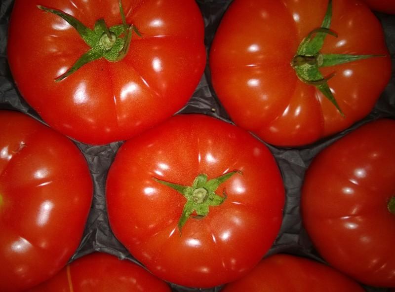 фото описание томаты суперстар сорта
