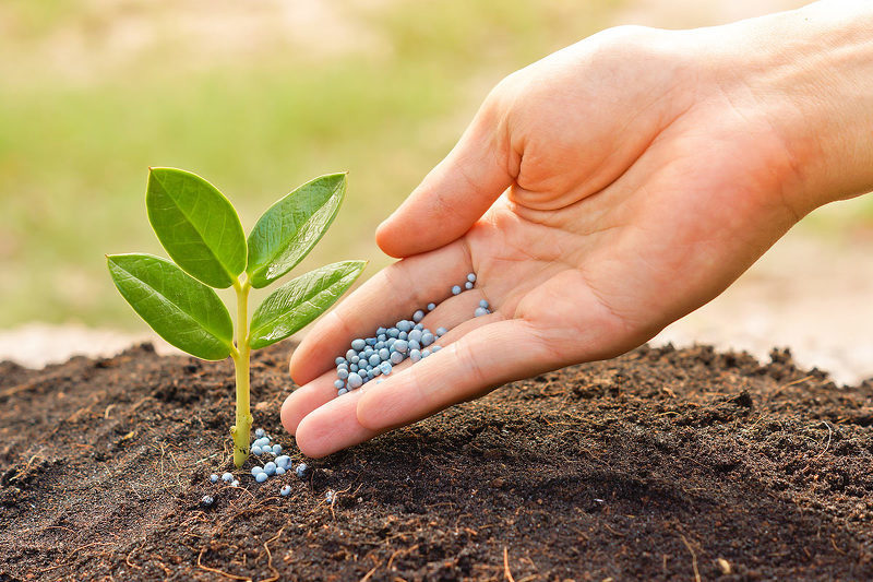 Улучшение качества грунта с помощью удобрений