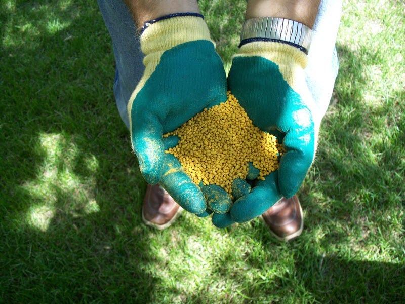 Удобрение для газона своими руками