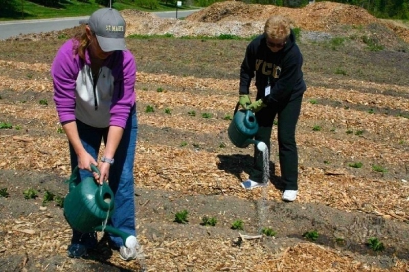 Внекорневая подкормка картофеля после посадки