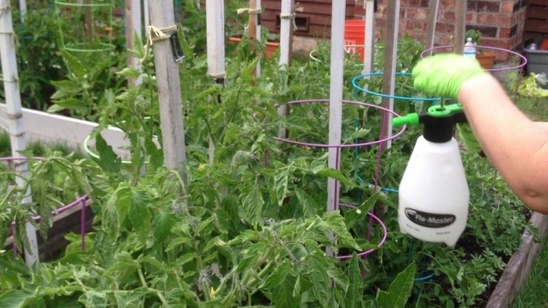 Борная кислота - применение в огороде, дозирование