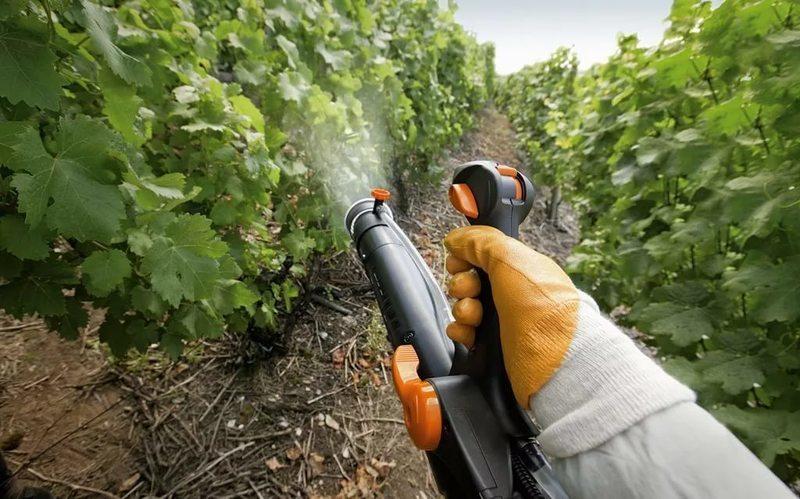 Внекорневая подкормка винограда весной