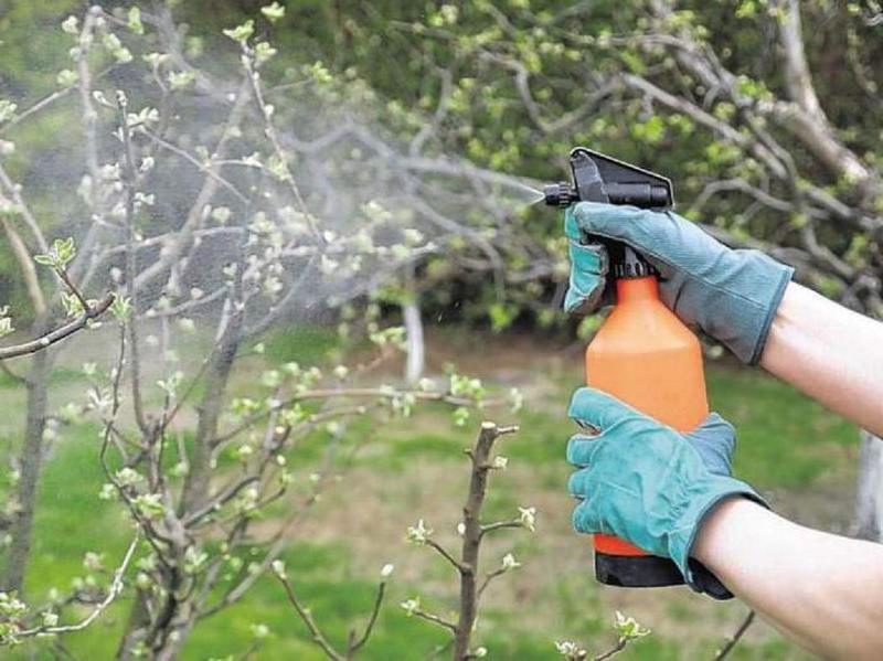 Внекорневая подкормка яблонь