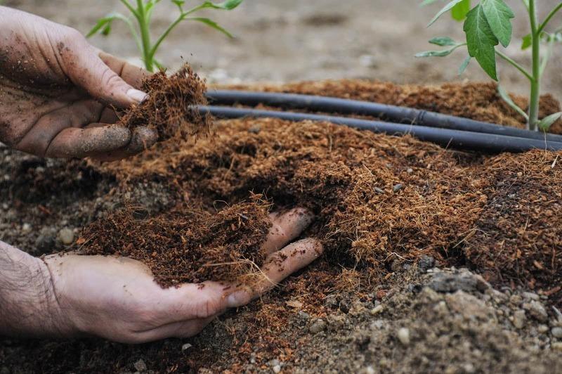 Внесение компоста на грядки осенью после уборки гороха