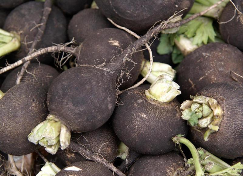 Выращиваем черную и маргеланскую редьку в огороде
