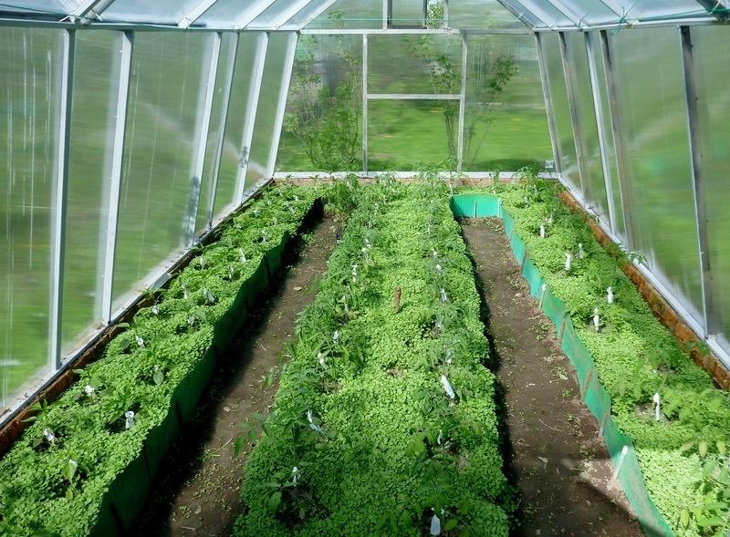 Нет урожая в теплице - устала почва, нужно срочно восстанавливать