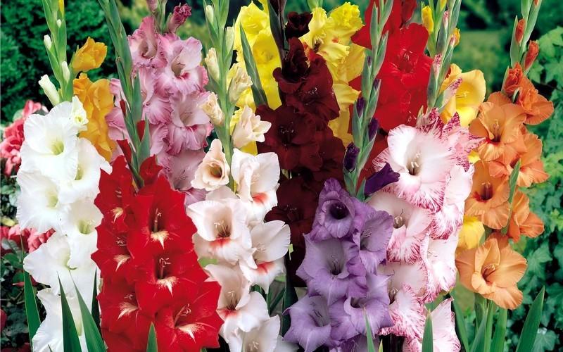 Заказ клубней цветов почтой купить цветы в теплице харьков