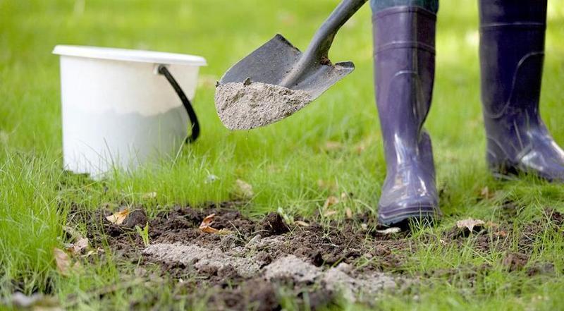Как вывести с огорода слизней - раскислением почвы