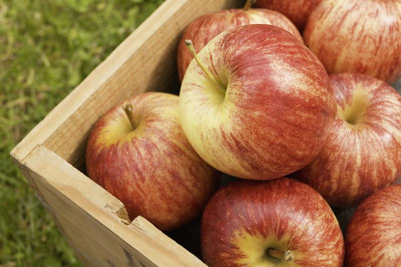 Яблоки гала - товарный вид