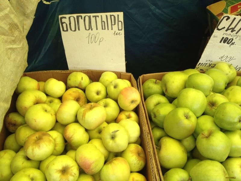 Яблоня Богатырь - одна из самых неприхотливых к условиям выращивания