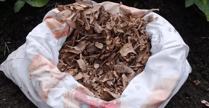 Заготовка картофельных очистков в сушеном виде